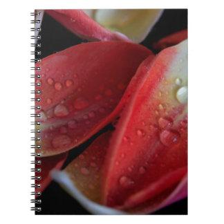 Cadernos Embers da tulipa