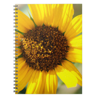 Cadernos Ensolarado