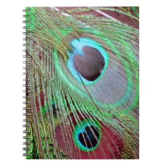 Cadernos Espiral A pena de fluxo do pavão dos olhos azuis
