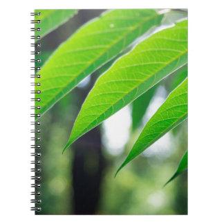 Cadernos Espiral Ailanthus Defocused e borrado do ramo