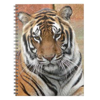 Cadernos Espiral Alugueres Tigres no projecto