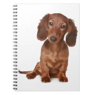 Cadernos Espiral Amor do cão de filhote de cachorro do Dachshund