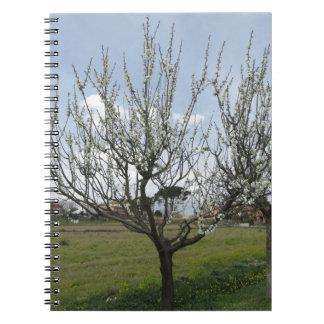 Cadernos Espiral Árvore de pera de florescência no jardim Toscânia,