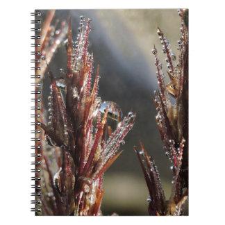 Cadernos Espiral Árvores do diamante