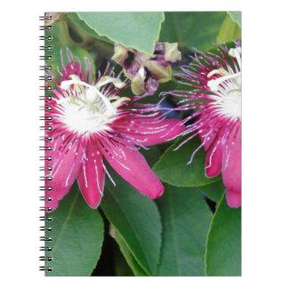 Cadernos Espiral Close up vermelho de duas flores da paixão fora na