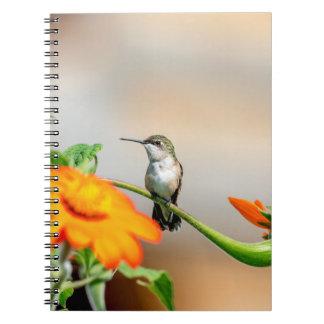 Cadernos Espiral Colibri em uma planta de florescência