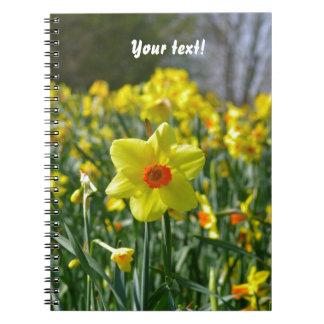 Cadernos Espiral Daffodils amarelos alaranjado 01.0.T
