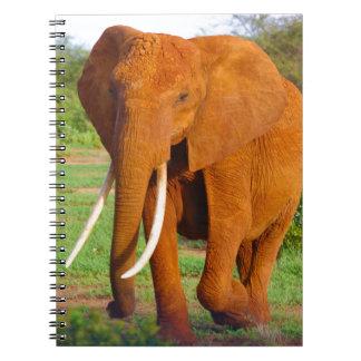 Cadernos Espiral Elefante alaranjado bonito