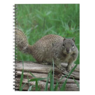 Cadernos Espiral Esquilo