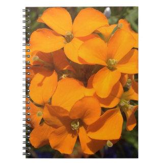 Cadernos Espiral Explosão da laranja