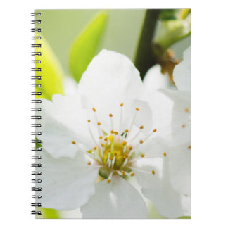 Cadernos Espiral Florescência da primavera