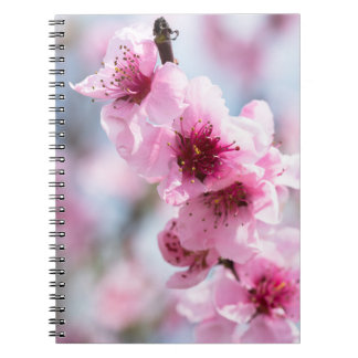 Cadernos Espiral Florescência do primavera