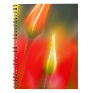Cadernos Espiral Fulgor vermelho e amarelo da tulipa