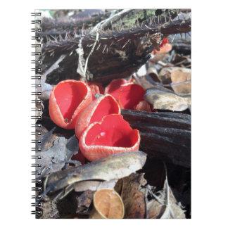 Cadernos Espiral Fungo de copo vermelho