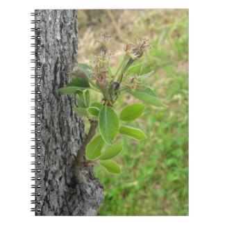 Cadernos Espiral Galho da árvore de pera com os botões no primavera