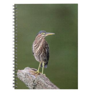 Cadernos Espiral Garça-real verde em um registro