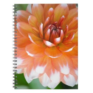 Cadernos Espiral Glória alaranjada e branca