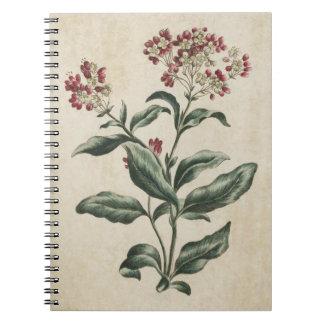 Cadernos Espiral Ilustração floral botânica de Laurestina do