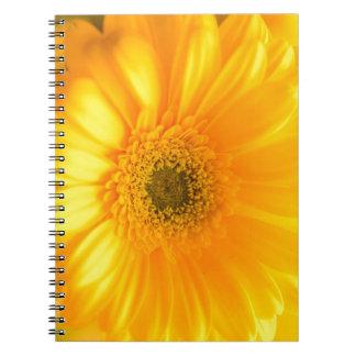 Cadernos Espiral Luz do sol