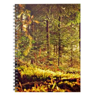 Cadernos Espiral Luz na floresta