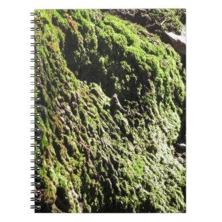 Cadernos Espiral O musgo verde no detalhe da natureza de musgo