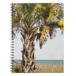 Cadernos Espiral Palmeiras no passeio à beira mar da costa leste de