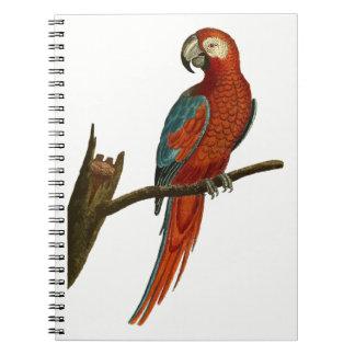 Cadernos Espiral Papagaio