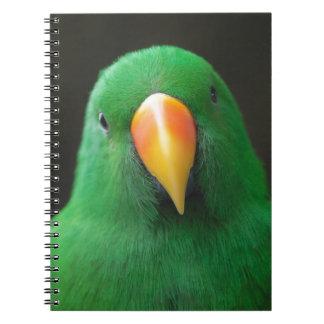 Cadernos Espiral Papagaio verde