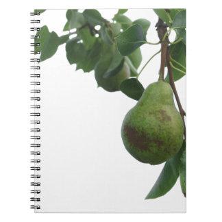 Cadernos Espiral Peras verdes que penduram em uma árvore de pera