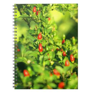 Cadernos Espiral pimentas