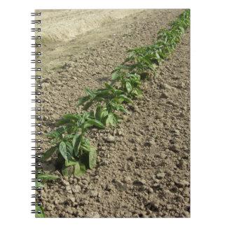 Cadernos Espiral Plantas frescas da manjericão que crescem no campo