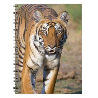 Cadernos Espiral Rapina de desengaço do Tigress fêmea