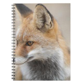 Cadernos Espiral raposa