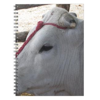 Cadernos Espiral Retrato do Chianina, raça italiana do gado