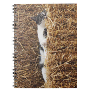 Cadernos Espiral Sesta do gato da tarde
