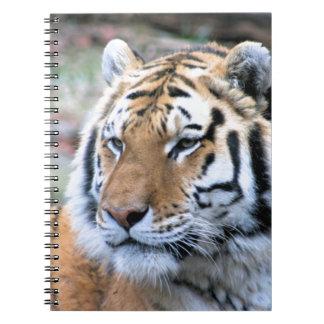 Cadernos Espiral Tigre de Bengal real estóico dos alugueres