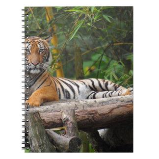 Cadernos Espiral Tigre do Malay dos alugueres que Lounging no