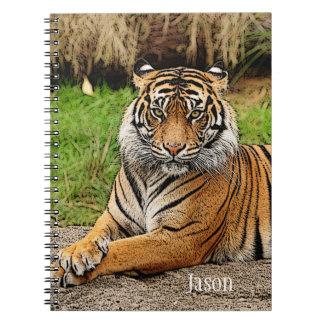 Cadernos Espiral Tigre e escola do nome