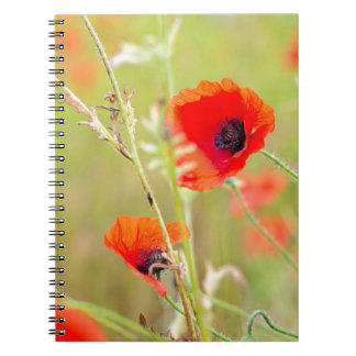 Cadernos Espiral Tiro macio de papoilas vermelhas no campo