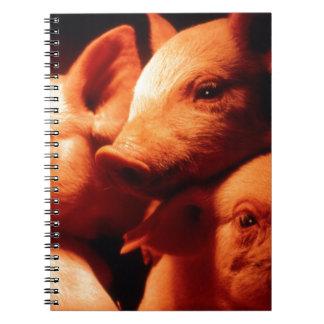 Cadernos Espiral Três porcos pequenos