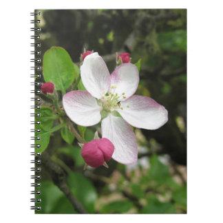 Cadernos Flor cor-de-rosa da maçã no primavera. Toscânia,