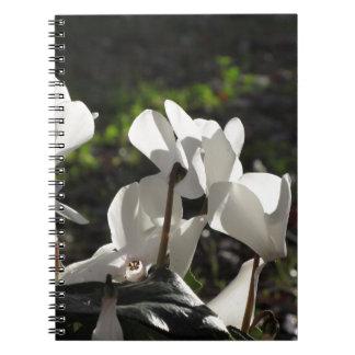 Cadernos Flores brancas do cyclamen de Backlits no fundo