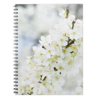 Cadernos Florescência da primavera