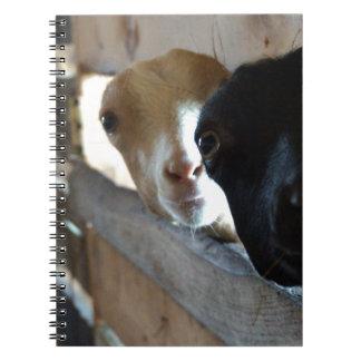 Cadernos Foco da cabra