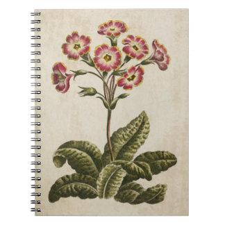 Cadernos Ilustração floral botânica de Polianthus do