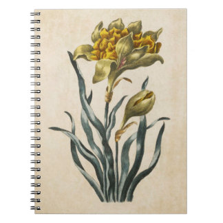 Cadernos Ilustração floral botânica do Daffodil do vintage