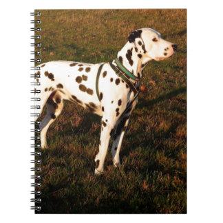 Cadernos Kevin o Dalmatian