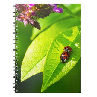 Cadernos Ladybug Love