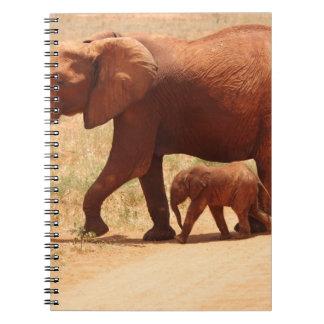 Cadernos Mamã e Cub do elefante