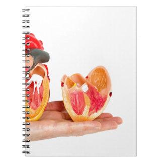 Cadernos Mão com modelo humano do coração em background.jp